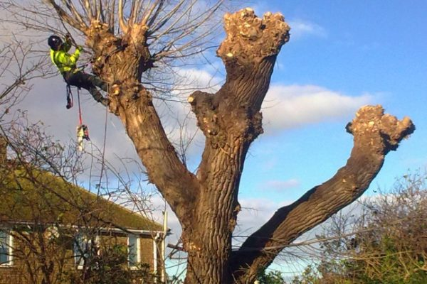 tree surgery and arboriculture