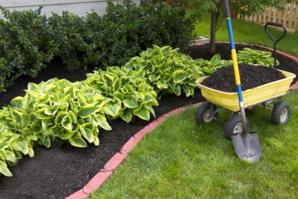 garden border maintenance